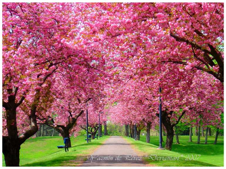 via: http://hdnaturepictures.com/tree-bloom-in-spring.html